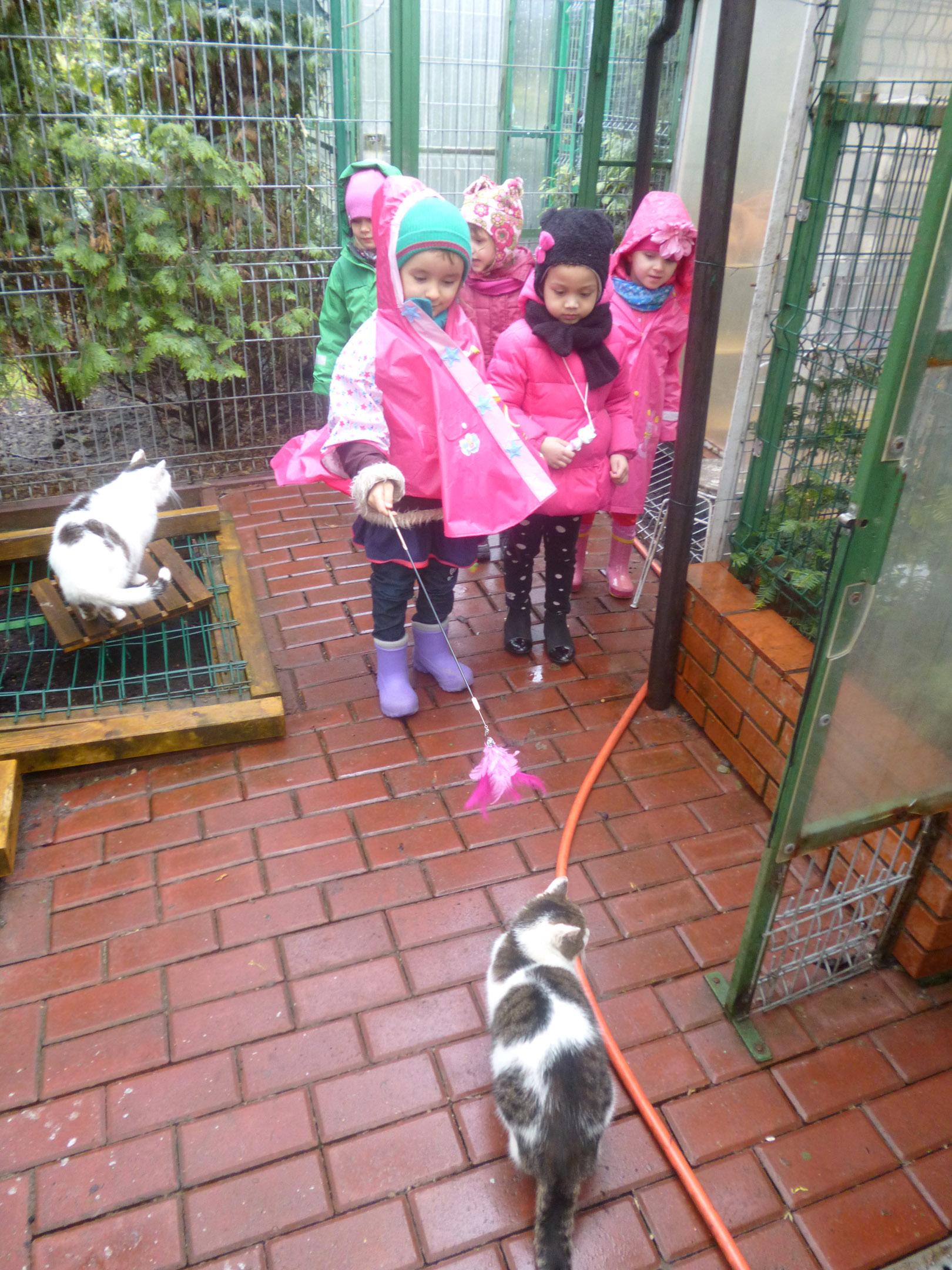 odwiedzamy kotki w schronisku